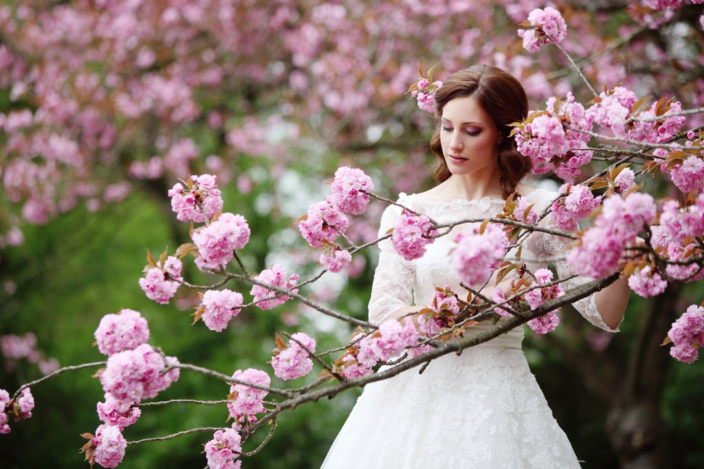 Photo bride looks down on a low branch filled with cherry blossoms