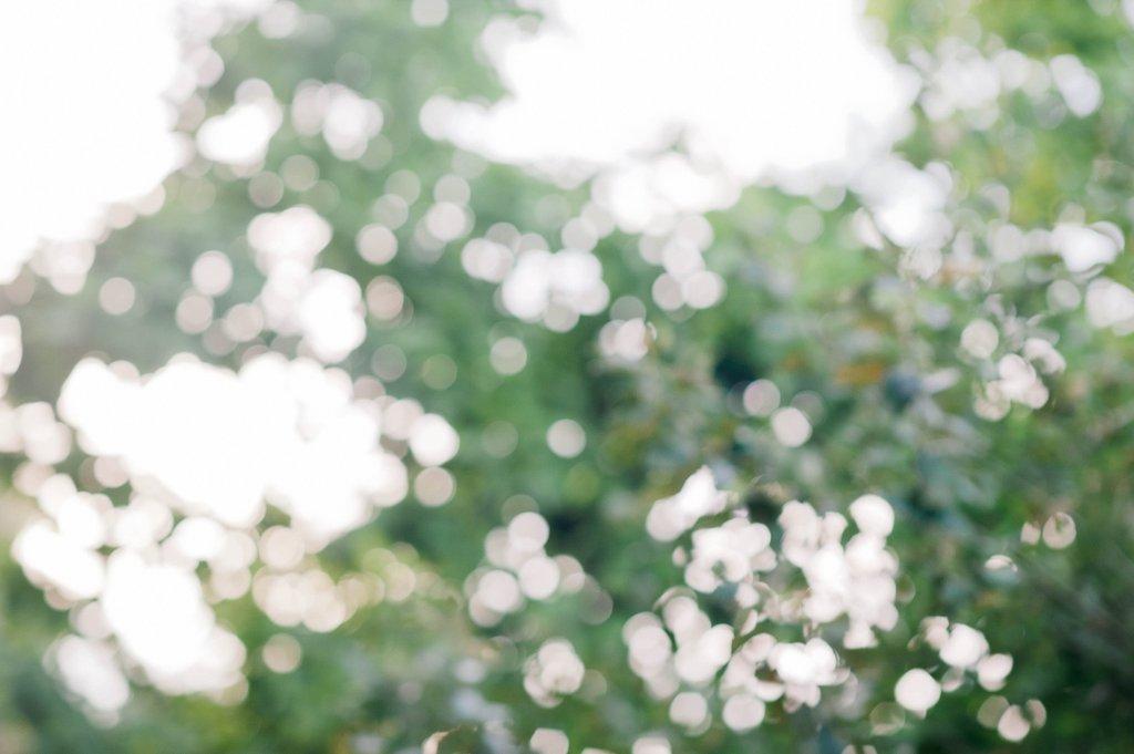 Photo Hochzeitslocation mit Parkbäumen