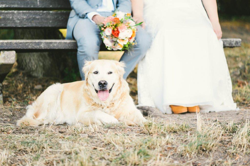 Photo Golden Retriever liegt als Brauthund, vor dem Brautpaar liegend.