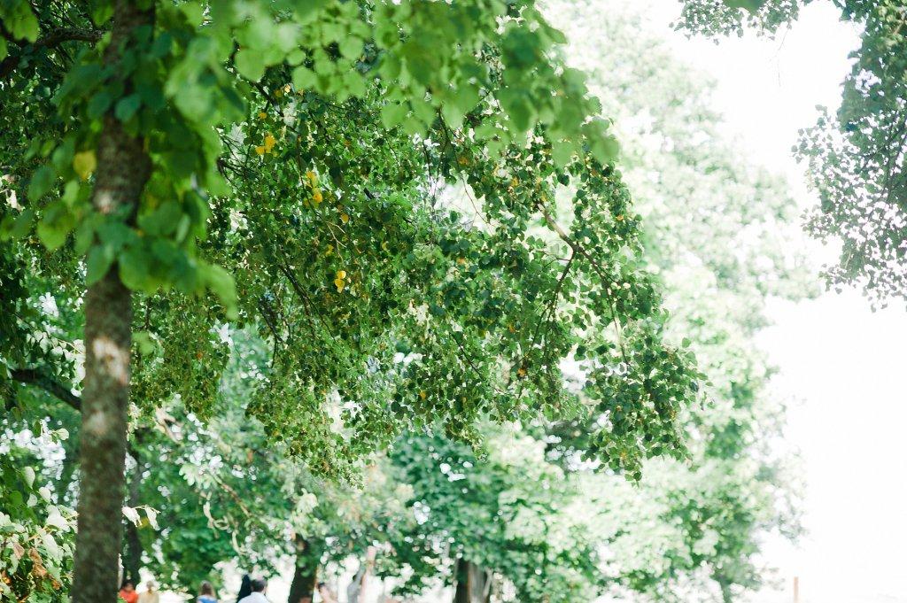 Photo Parkanlage mit hohen Bäumen